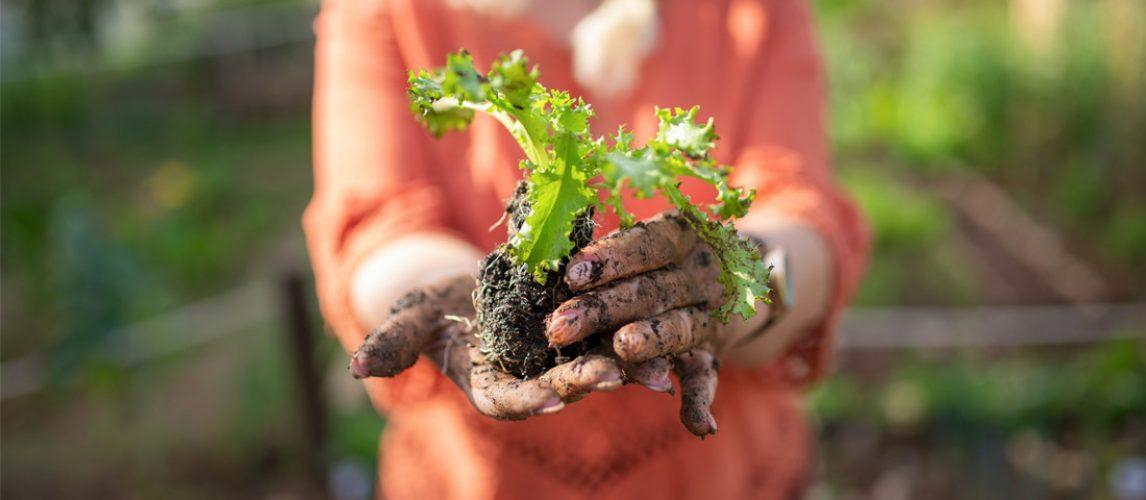 Blog 1100x733 contaminated soil